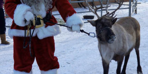 bragg creek reindeer