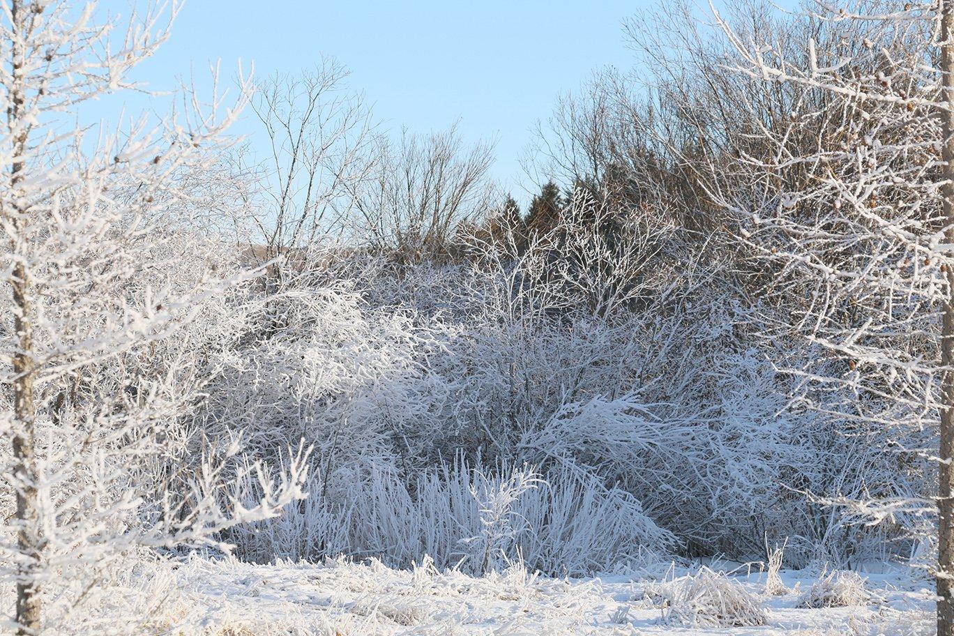 winter hoarfrost