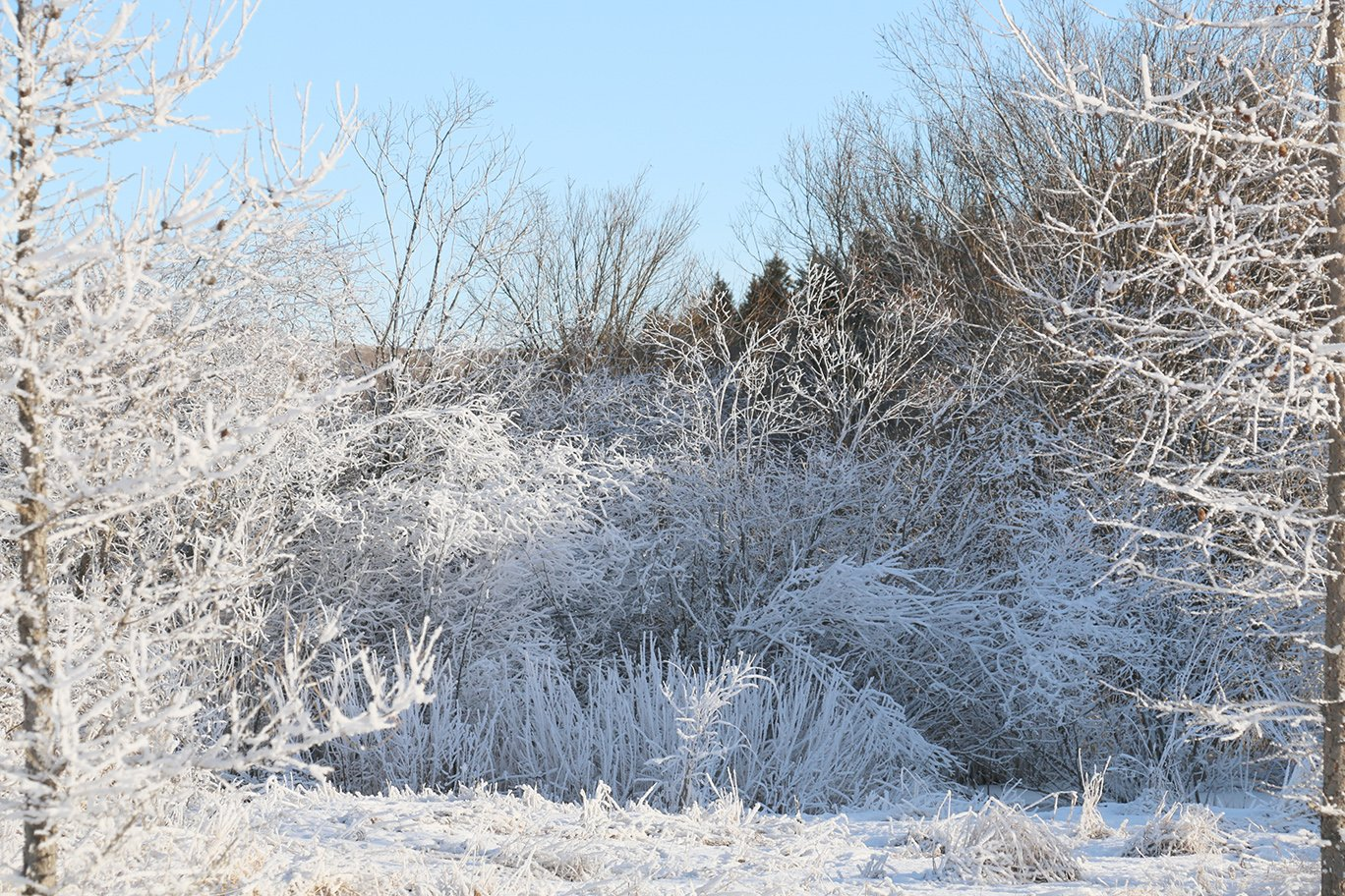 winter hoarfrost