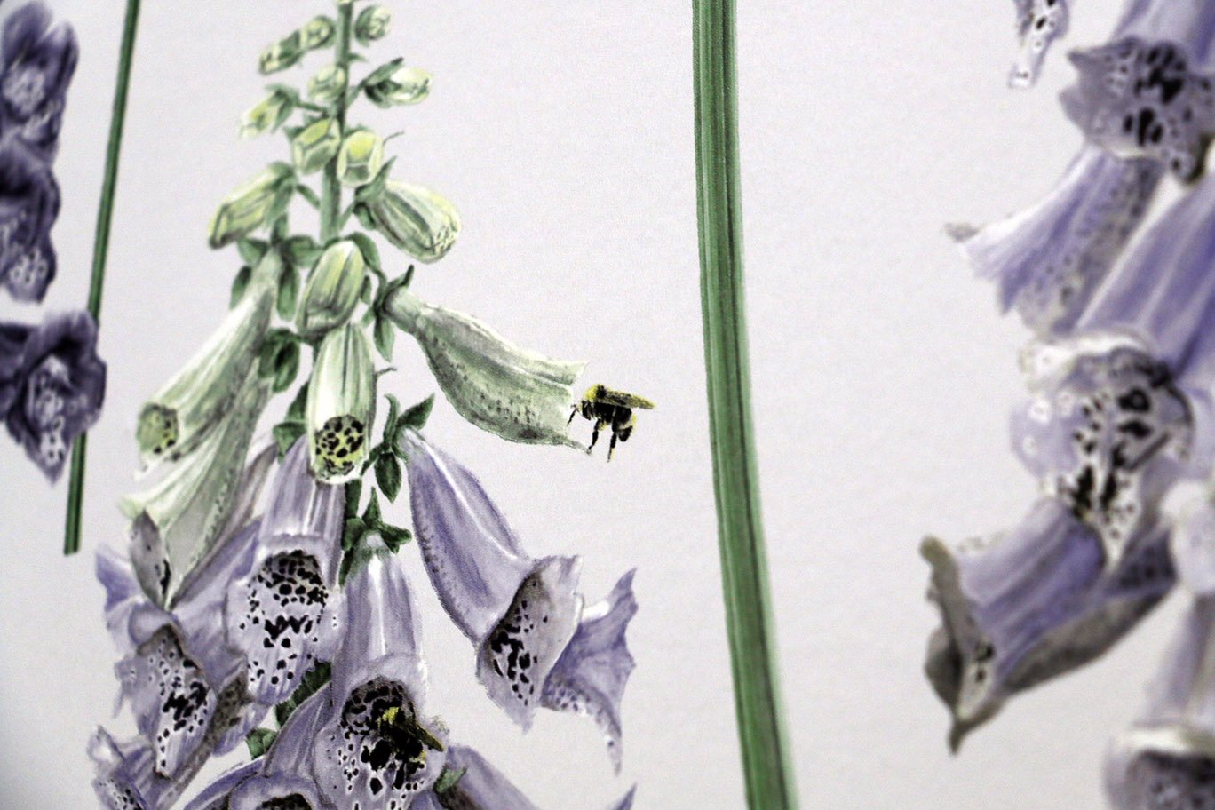 foxglove wallpaper from graham and brown