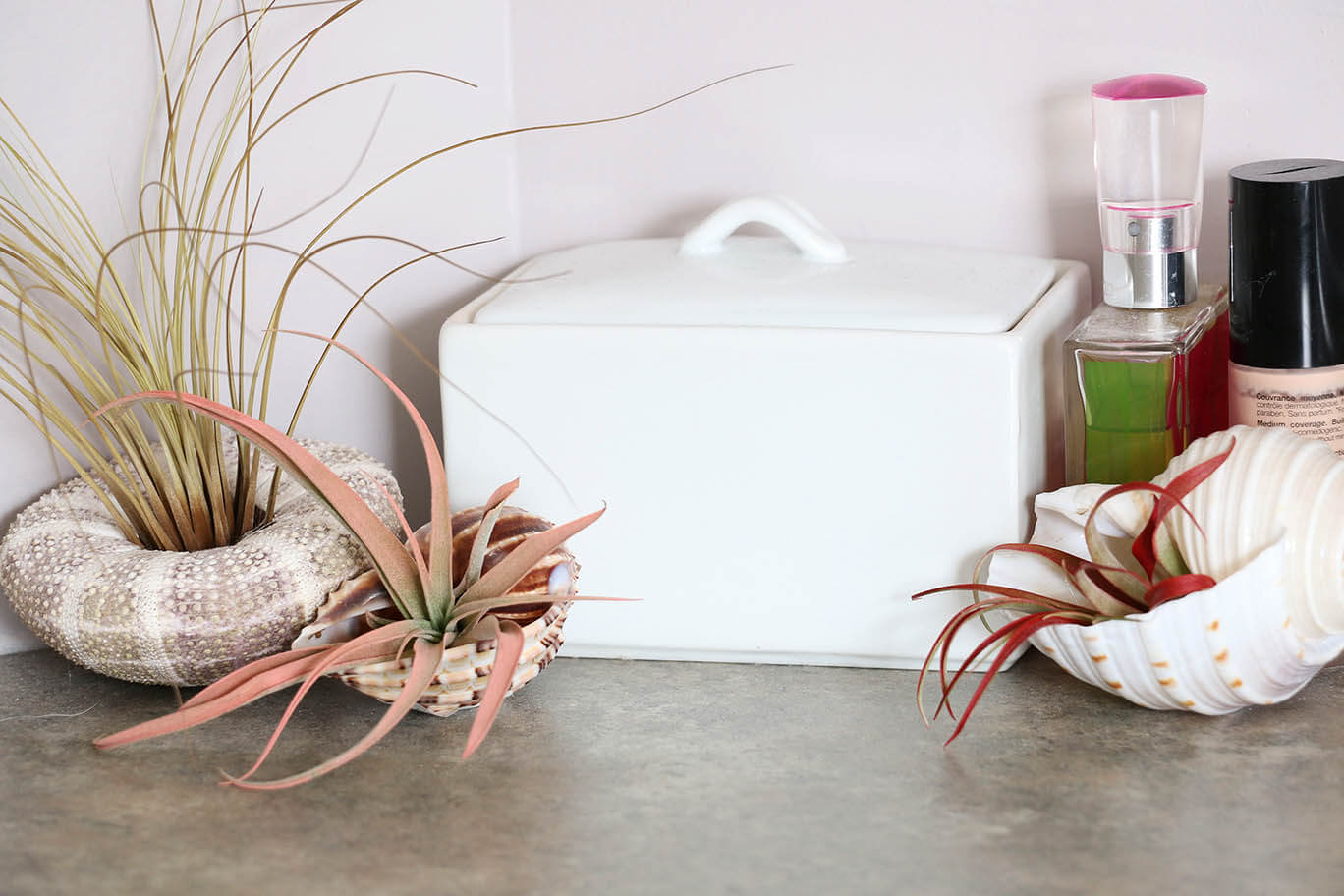 bathroom-air-plants