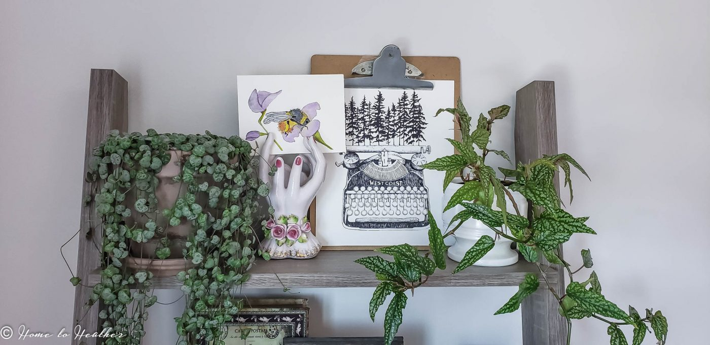 hanging plant varieties to decorate a shelving unit