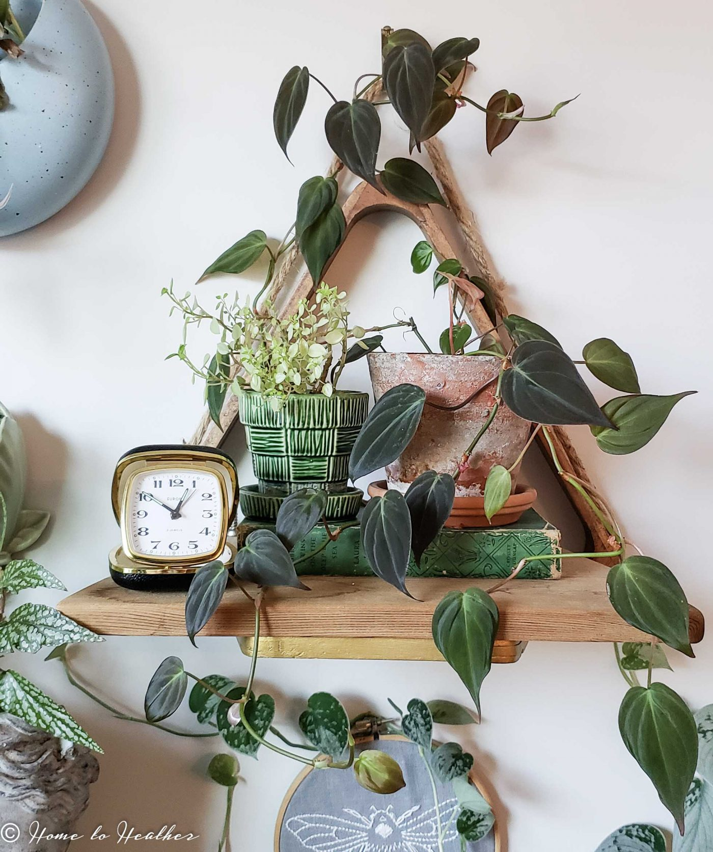 philodendron micans plant styling